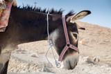 donkey for tourist riding tourists at St George Orthodox Monaste