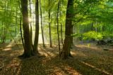Sonnenstrahlen scheinen durch Morgennebel und verzaubern den Wald