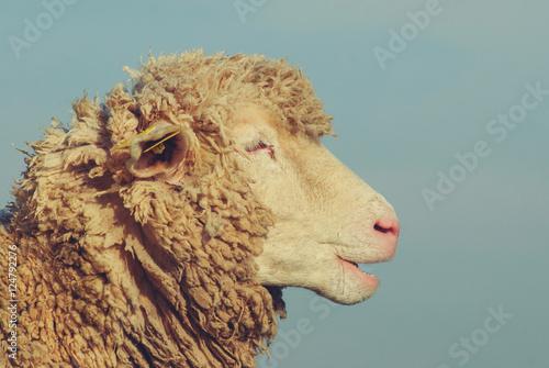 Mouton - 124792276