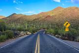 Saguaro National Park - 124796483