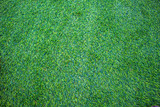 Fototapety Background of green grass.