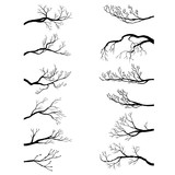 set of tree branches - 124824679