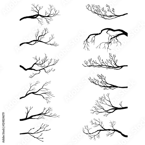 set of tree branches