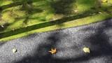 道に落ちた落ち葉