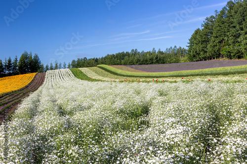 Tuinposter Olijfboom flower blooming in Japan