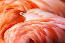 Plumes Flamingo - Fond rose Oiseau avec la tête cachée sur Feathers