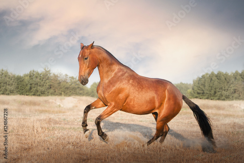 red horse jump on the field with yellow grass on sky background