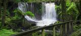 Fototapety The beautiful Horseshoe Falls after heavy rain fall in Mount Field National Park, Tasmania, Australia.
