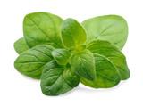 Oregano herbs - 124975099