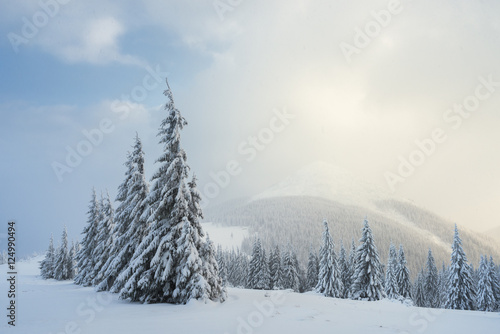 Poster Christmas landscape with fir tree in the snow