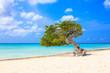 Постер, плакат: Aruba Netherlands Antilles Divi divi tree on the beach