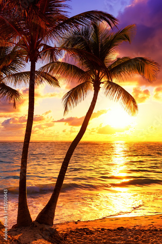 Foto op Plexiglas Bruin Coconut palm trees against colorful sunset
