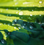 Fototapety Green leaf with dew drops