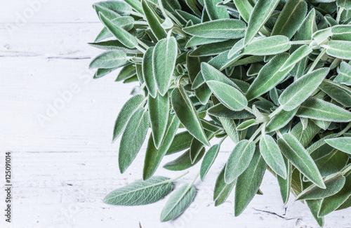 Sage herb on white background..