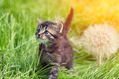 mala-figlarka-chodzi-na-trawie-obok-ampuly
