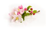Apfelblüte - 125096497