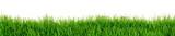 Gras Wiese Rasen - 125098431