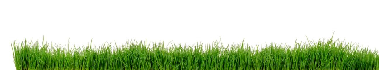 Gras Wiese Rasen © Thomas Söllner