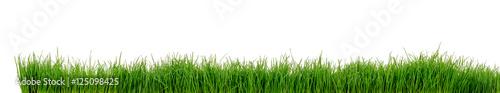 Papiers peints Photos panoramiques Gras Wiese Rasen