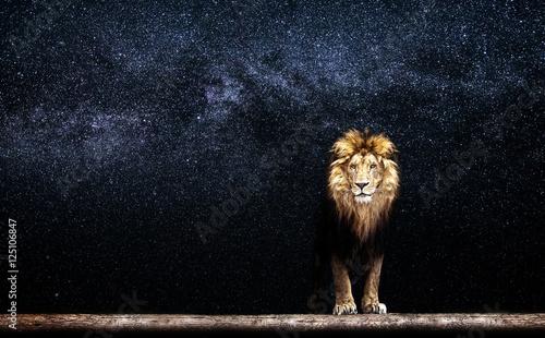 Leinwandbild Motiv Portrait of a Beautiful lion, lion in the starry night