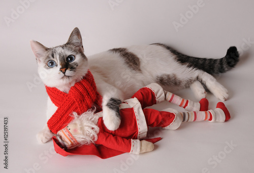 Cat in red scarf with Santa Claus on a light background Poster