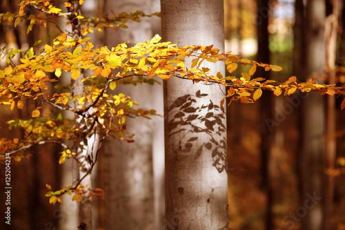 Zdjęcia na płótnie, fototapety na wymiar, obrazy na ścianę : Jesień w lesie