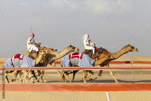 Foto op Canvas Abu Dhabi Camel race in Abu Dhabi