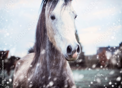 Poster Gray horse at winter nature background with fall of snow