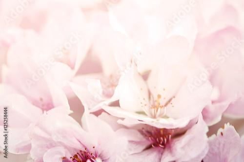 Pastel flower background. Floral art concept.