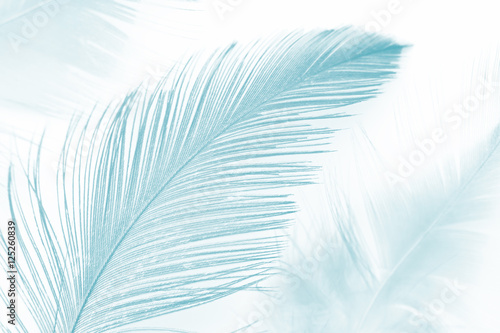 soft feather luxurious color turquoise emerald green texture background - 125260839