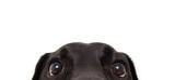 Zabawny pies