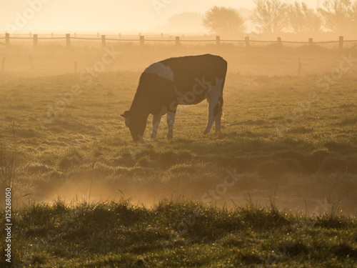 Poster Kuh im Nebel