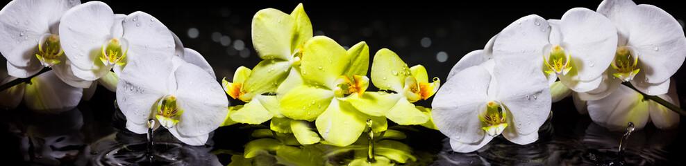 Орхидеи © FotoBrest
