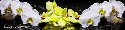 Fototapeta Орхидеи