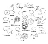 Set of black outline doodle fruit isolated on white background. Vector illustration