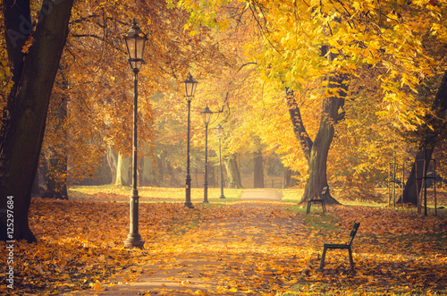 Aluminium Oranje Colorful tree alley with row of lanterns in the autumn park on a sunny day in Krakow, Poland