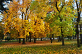 Autumn trees fallen leaves colorful fall scenery
