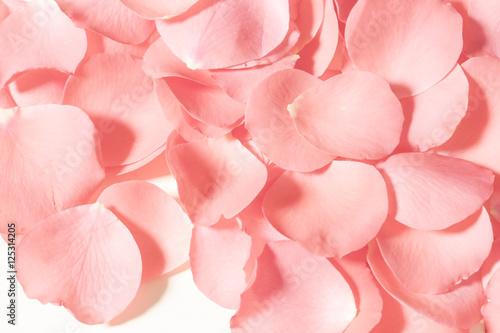 Foto Murales Rose petals