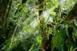 Dense Rainforest