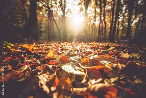 Złota jesień liści