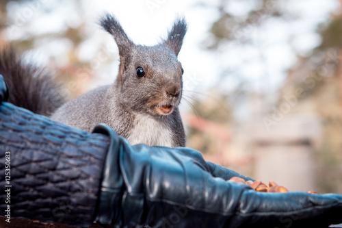 Tuinposter Eekhoorn Squirrel eating nuts.