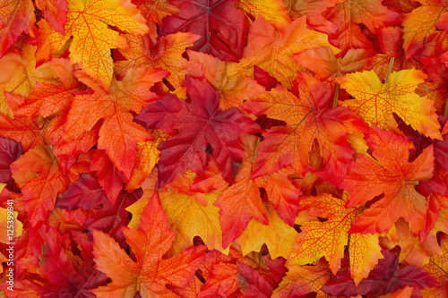 Autumn Leaves Background - 125399841