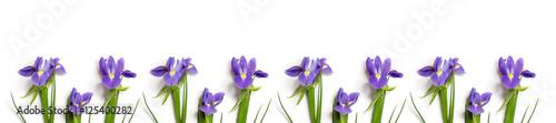 Fotobehang Iris fresh burgundy irises