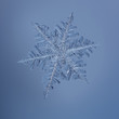 Real snowflake isolated on blue background