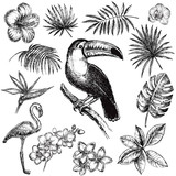 hand drawn sketch illustration tropical set