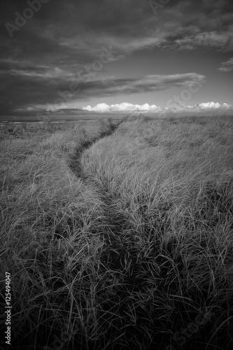 kreta-sciezka-przez-trawy-morskie-poza-widokiem-na-morze