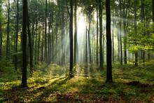 matin dans la forêt