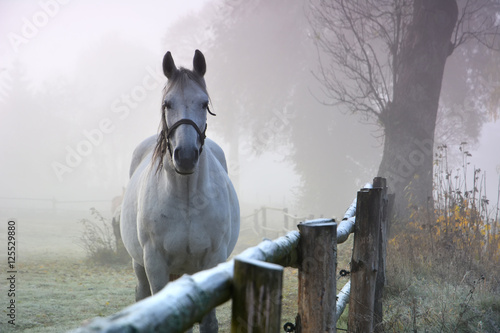Horse in morning autumn landscape © puchan