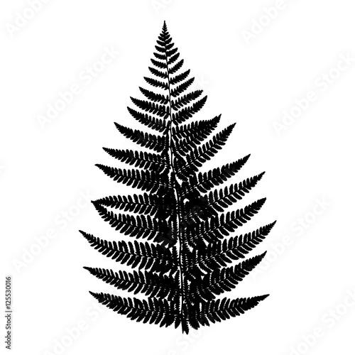 Fern leaf. Silhouette. Vector. EPS 10. - 125530016