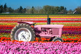 Pink Tractor and Tulips